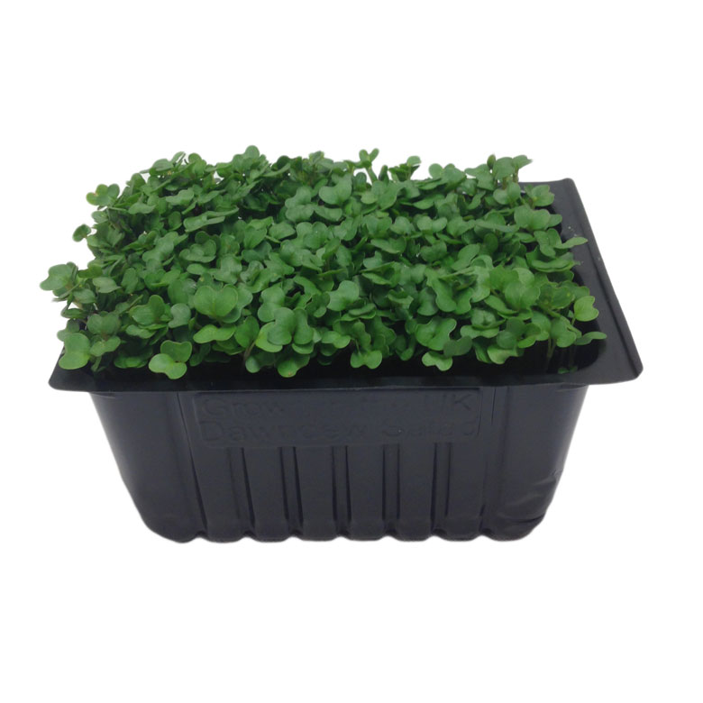 Fresh Salad Cress Punnet Fresher Food Sourced With Care Chef
